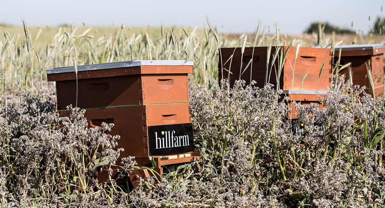Bee Hives at Hill Farm Suffolk